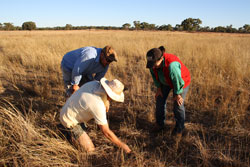 "Landholder Ashley McMurtrie, ""Gilgunnia"", Cobar, with NSW DPI Senior Research Scientist, Dr Cathy Waters and Technical Assistant, Robert Smith, examining results and water spreading and TGP fencing at ""Gilgunnia"""