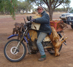 Don Salway, employed by the Blackwater Dog Trust, at work on Rick Keoghs's Blackall property