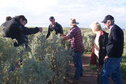 Checking out the Saltbush planted by Neil Sleep