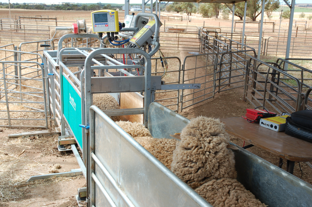 Precision Sheep Management technology